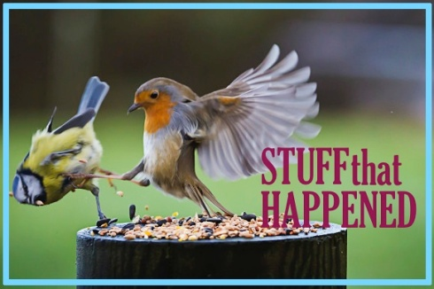 stuff that happened bird